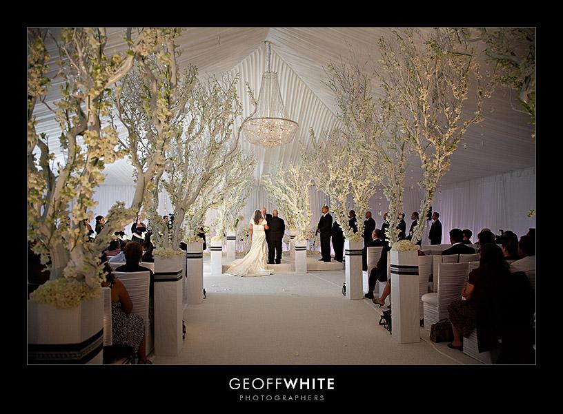 White Tree Wedding Decorations Gallery Decoration Ideas