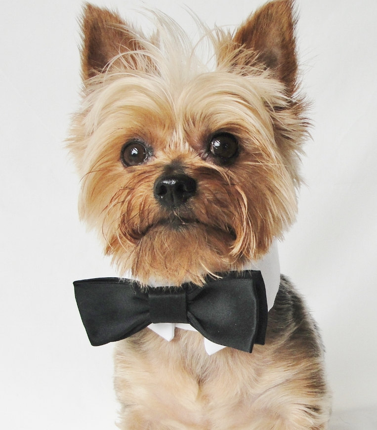 Awesome Dogs Wedding Outfits Ideas - Wedding Dress Ideas ...