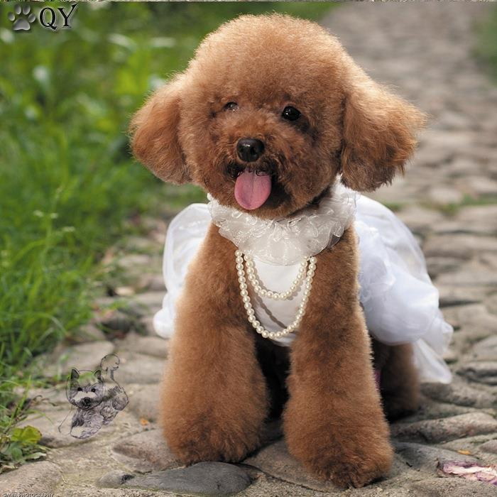 Dog Wedding Outfits