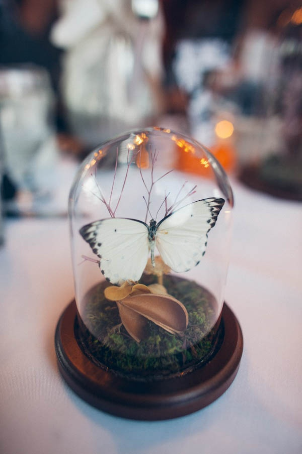 69 Best Butterfly Quince Wedding Images On Emasscraft Org